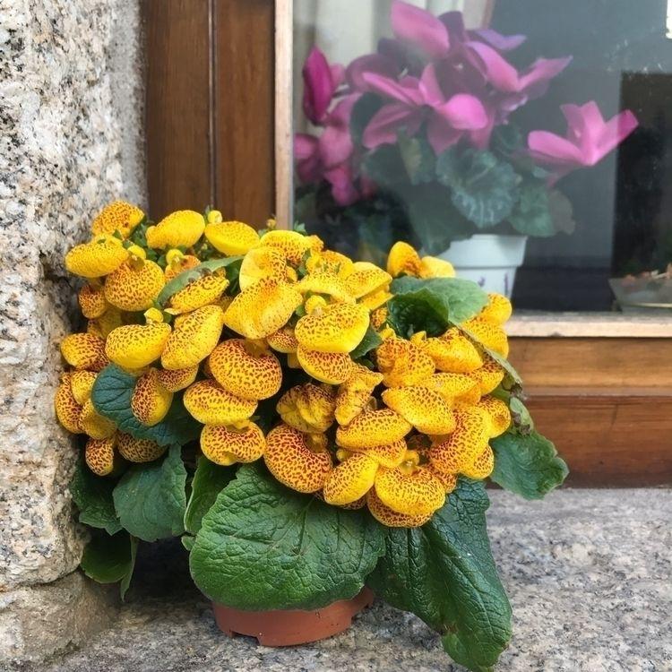 pict, flowers - pasajera | ello