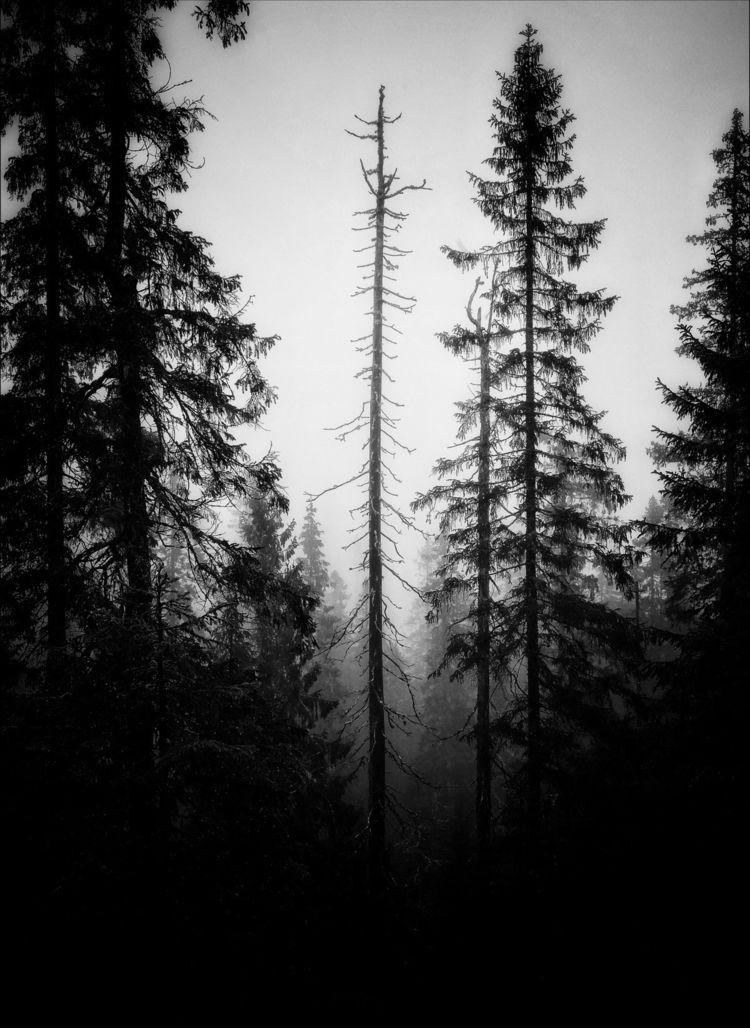 dead - blackandwhite, blackandwhitephotography - eirikharstad | ello