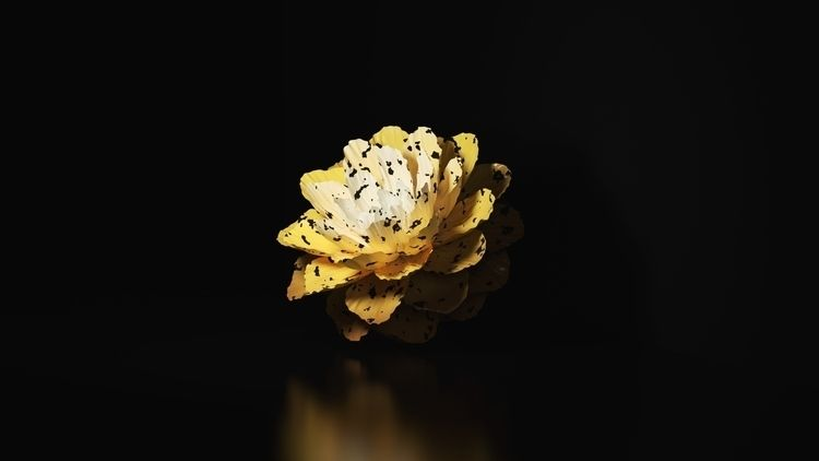 wild flower stuff, follow <3 - bfaiotto   ello