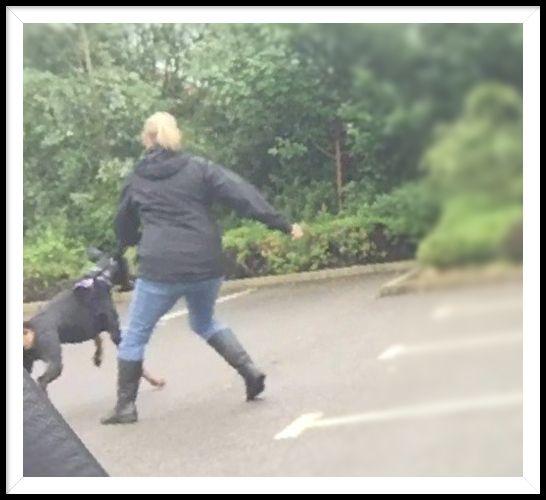 Dog Training Luka offers comple - juliecarter | ello