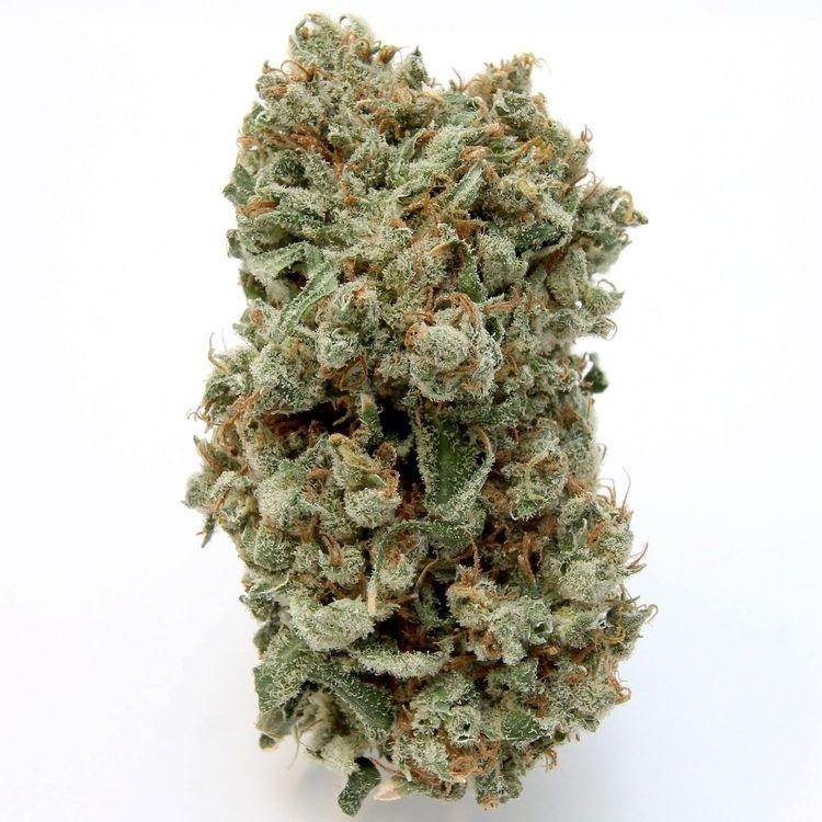 nice frosty Jack Herer friends  - greenz | ello