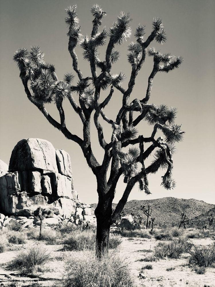 Joshua Tree National Park - blackandwhitephotography - davidjdeal | ello