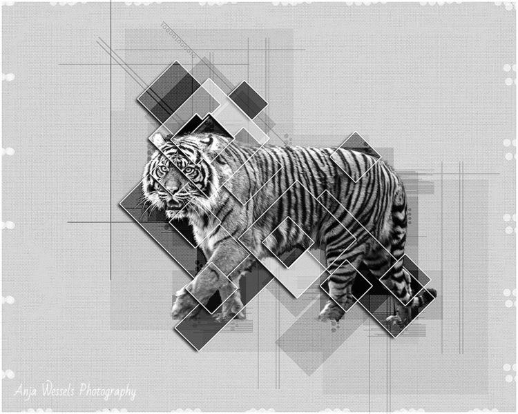 tiger photo … Burgers Zoo Frida - anjawessels | ello