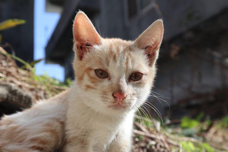 kitten - krliiiii-2 | ello