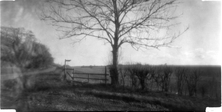 Pinhole photo tree Winchester-  - neilhoward   ello