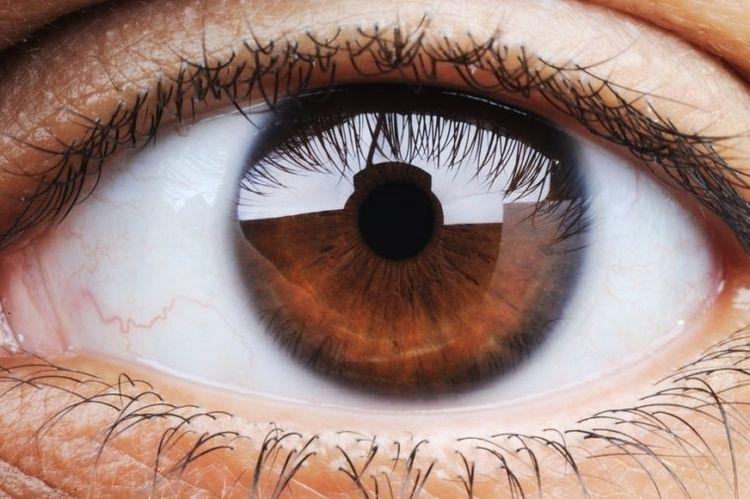 describe deep brown eyes creati - pasitheaanimalibera | ello