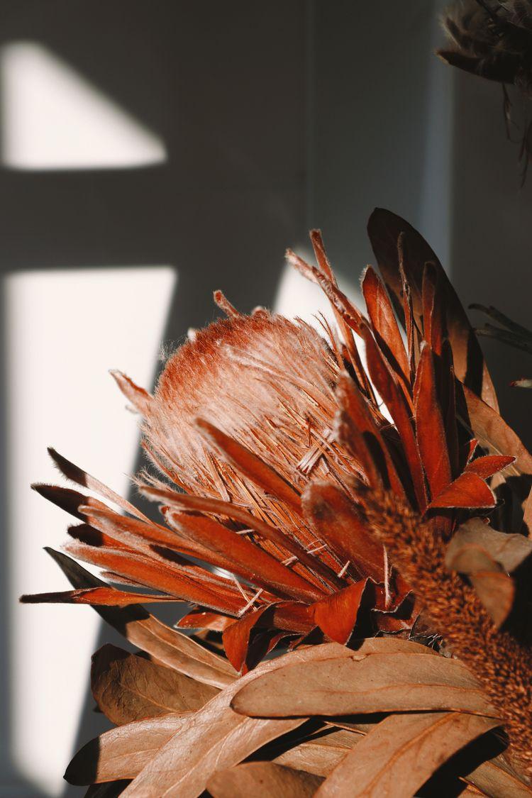 SUNLIGHT - ello, photography, dryplants - agzed | ello