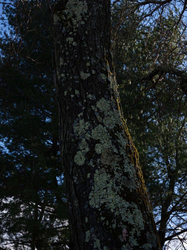 textures honey locust. 03.13.20 - oresti | ello