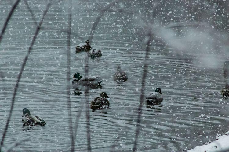 Weather Storm Stansberry Lake,  - davidseibold | ello
