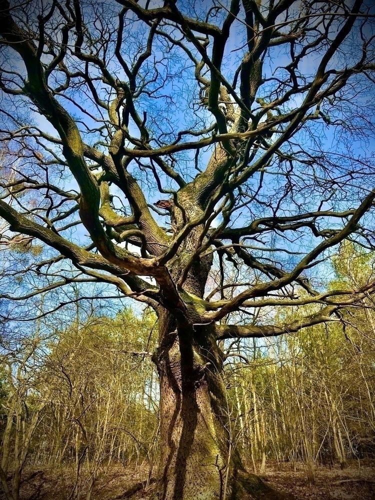 Joshua Tree Emerald Lake - trees - blueskipper | ello