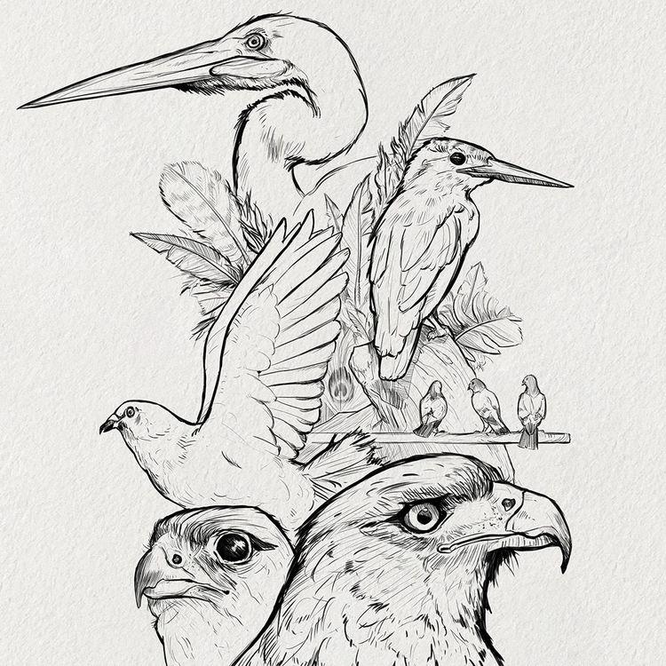 Sketches: Birds 2 watch progres - manfredrohrer   ello