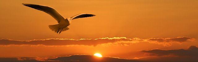 envy flying birds high sky drun - mihaibrinas | ello