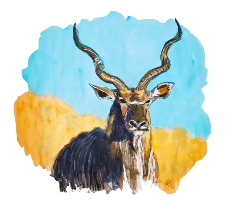 Quick Greater Kudu Bull  - drawingchallenge - kennyroutt | ello