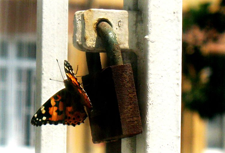 Butterfly lock - safe - photography - nurcan | ello