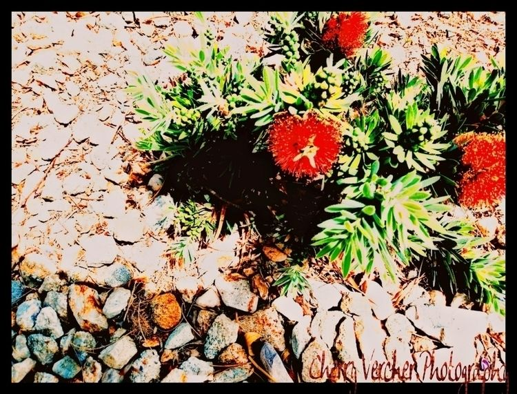 Photography - cherrysag25   ello