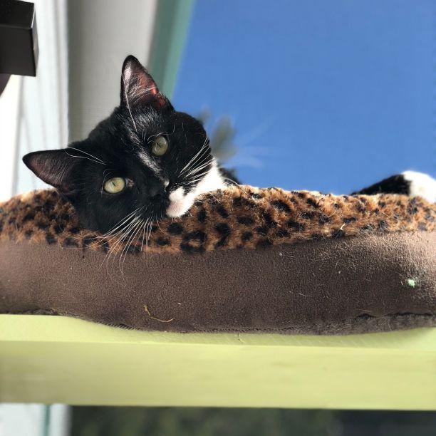 COMMENT SHARE BLACK ( WHITE) CA - snapcats | ello