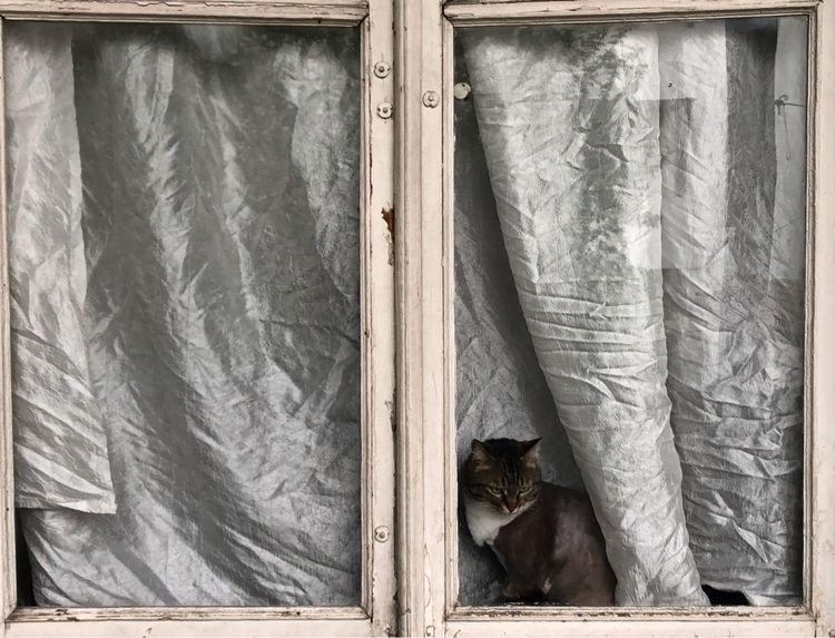 cat - ninikk | ello