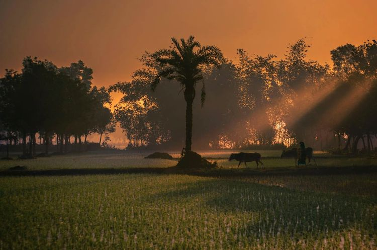 Beautiful Bangladesh..  - bangladesh - bangladeshbd | ello