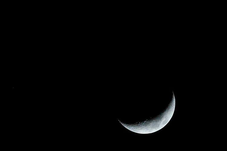Backyard, 2020 moon green chees - azdrk | ello