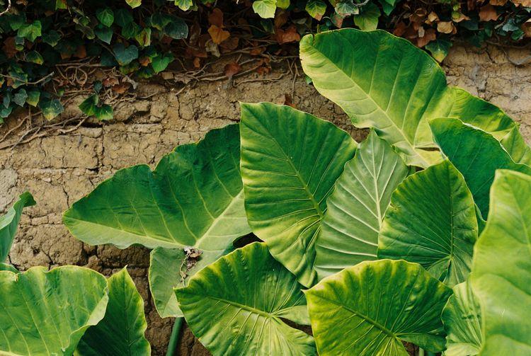 Se ven las plantas | México 201 - salvadorbfm | ello