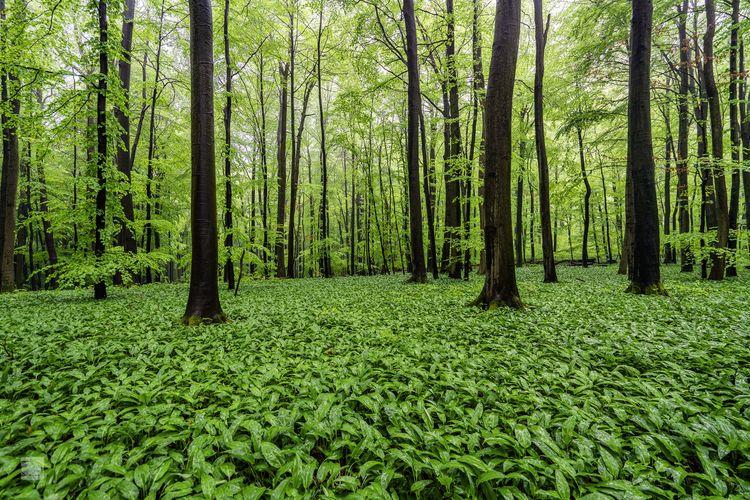 Hiking forest year heavy rainfa - phigun | ello