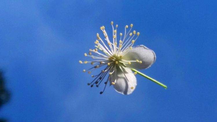 white blue weekend flower - hope - rebornmartins | ello