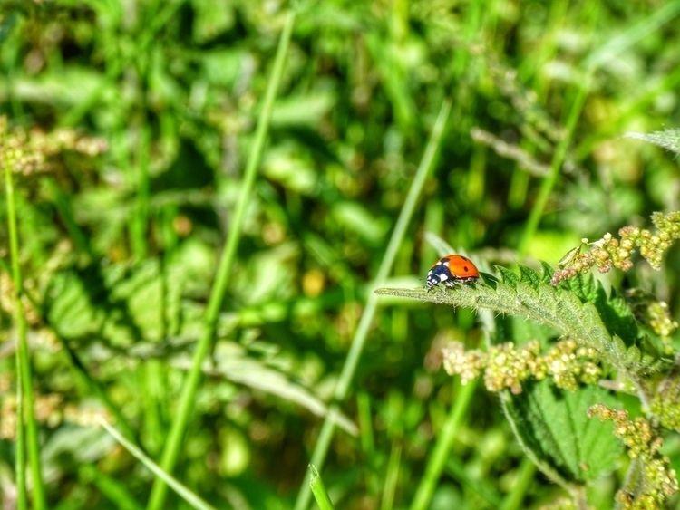 Ladybird (Panasonic Lumix TZ90 - paulbines | ello
