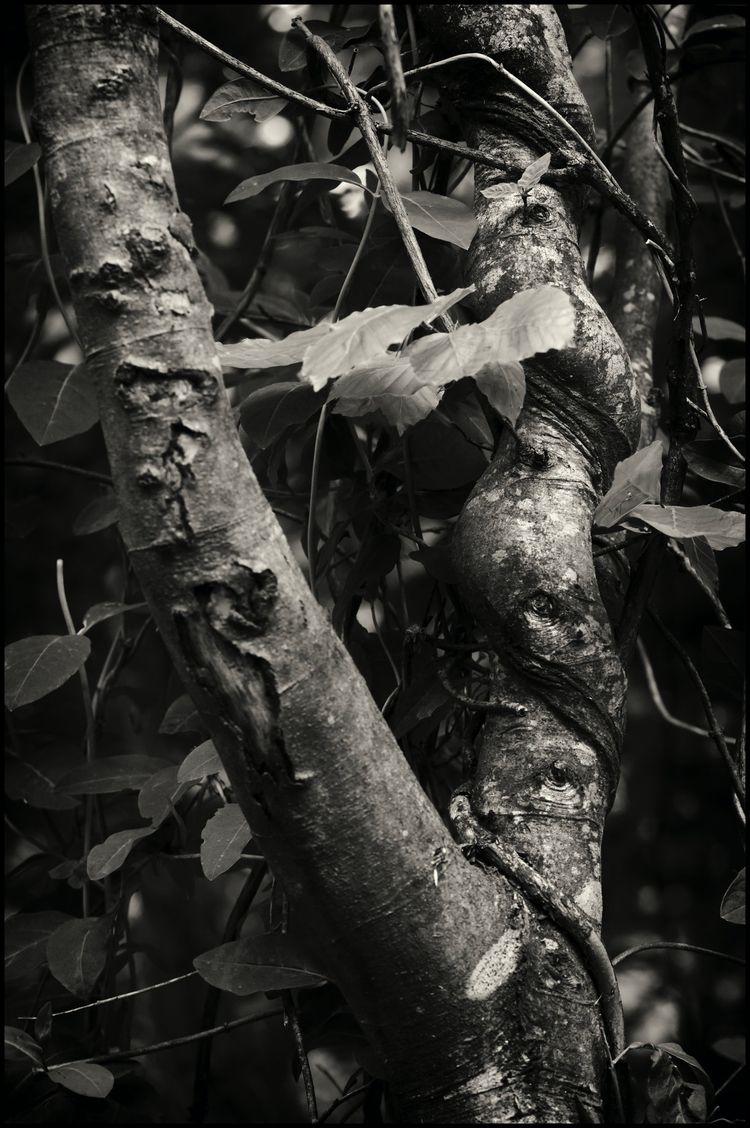 Listening Trees Steen Selvejer - sselvejer | ello