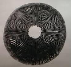 Psilocybe Cubensis Spore Prints - psychedelicsstoreusa | ello