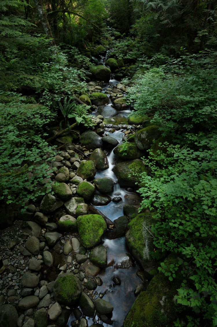 Peaceful Trickle small creek Ca - rhinocerous   ello
