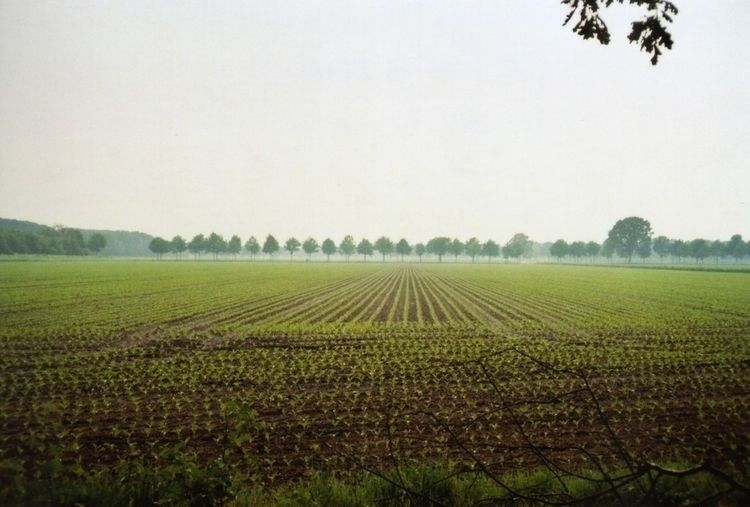 Corn Lines Germany, 2016 - 35mm - flausens_hans | ello
