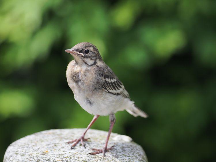 birds - annettespics | ello