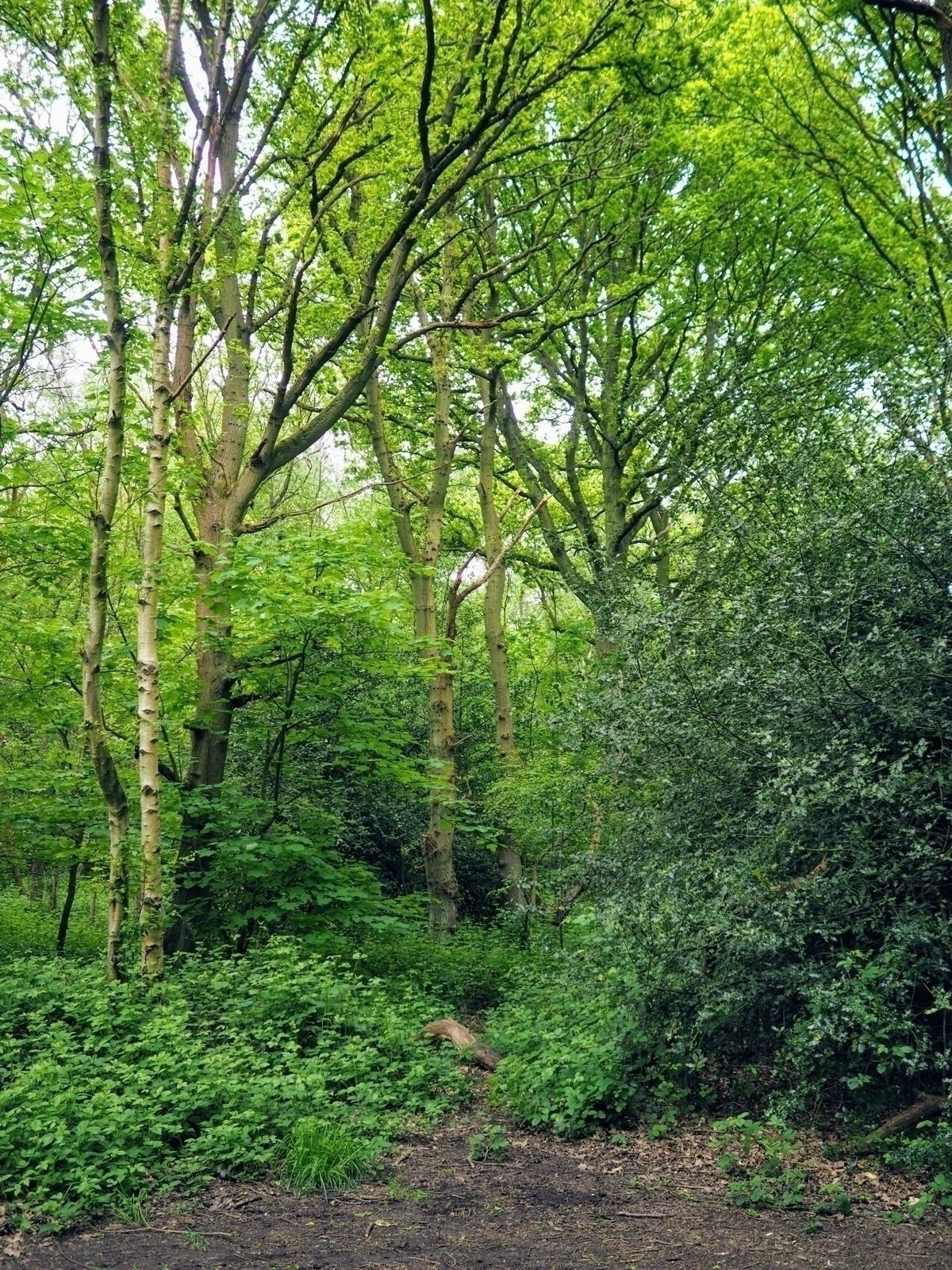 Greenery walk woods soak refres - skazman | ello