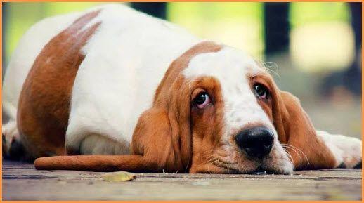 Cross Breed Puppies: Doubts Cho - ariel_ti | ello