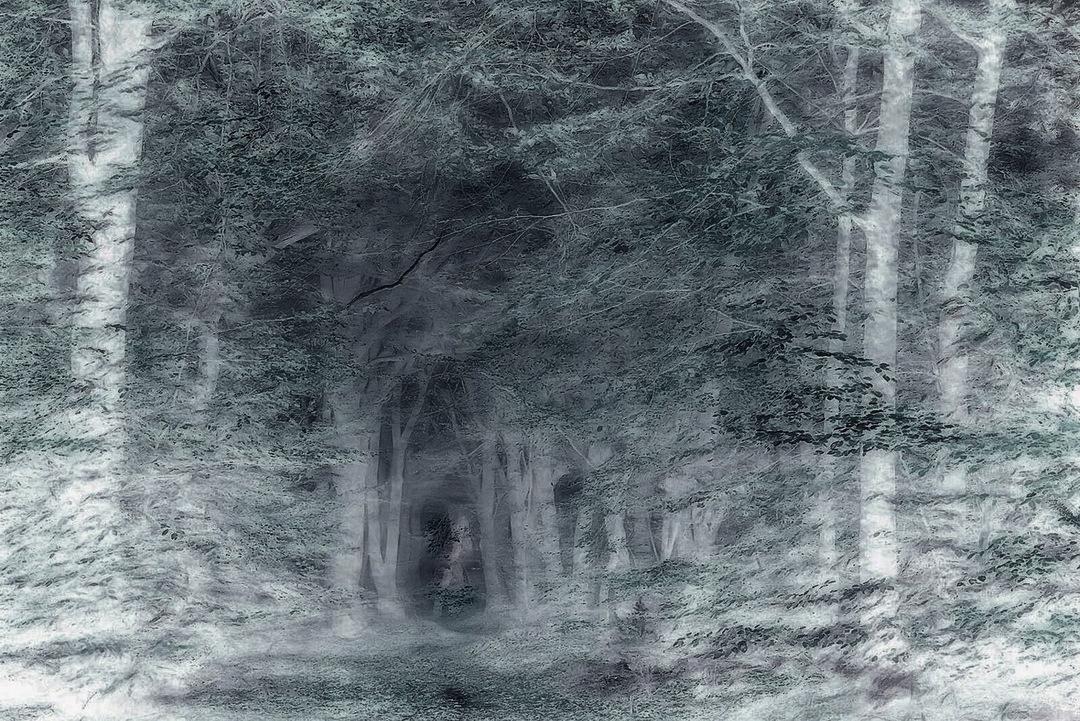 winter storm - landscape, forest - voiceofsf | ello