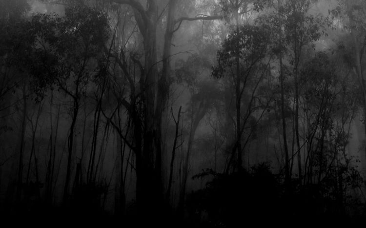 sea fog, 2 / darkness woods - landscape - voiceofsf | ello