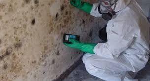 issue mold unwanted substance g - ultimatemoldcrew | ello