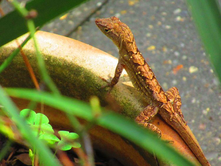 love designs lizards - fellaguy2 | ello