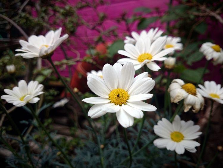 Flowers garden - gourmetkater | ello