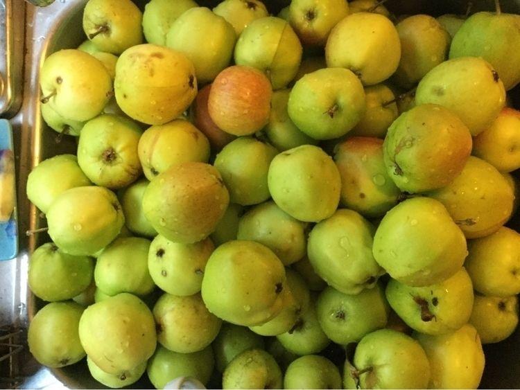 grateful gift apples making app - laurabalducci | ello