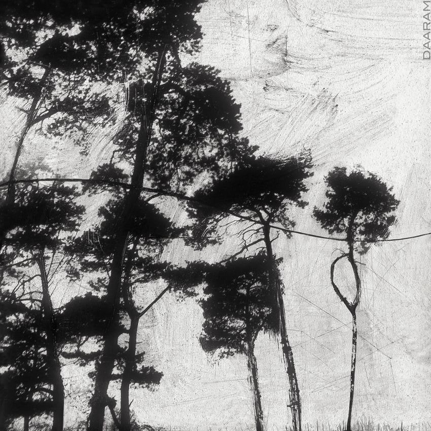 La Forêt // Forest: Mixedmedia - daaram | ello