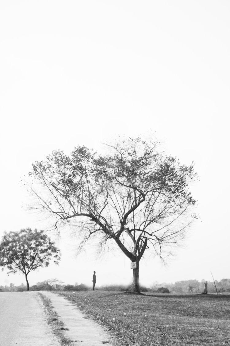 KOLA TREES - saggio   ello