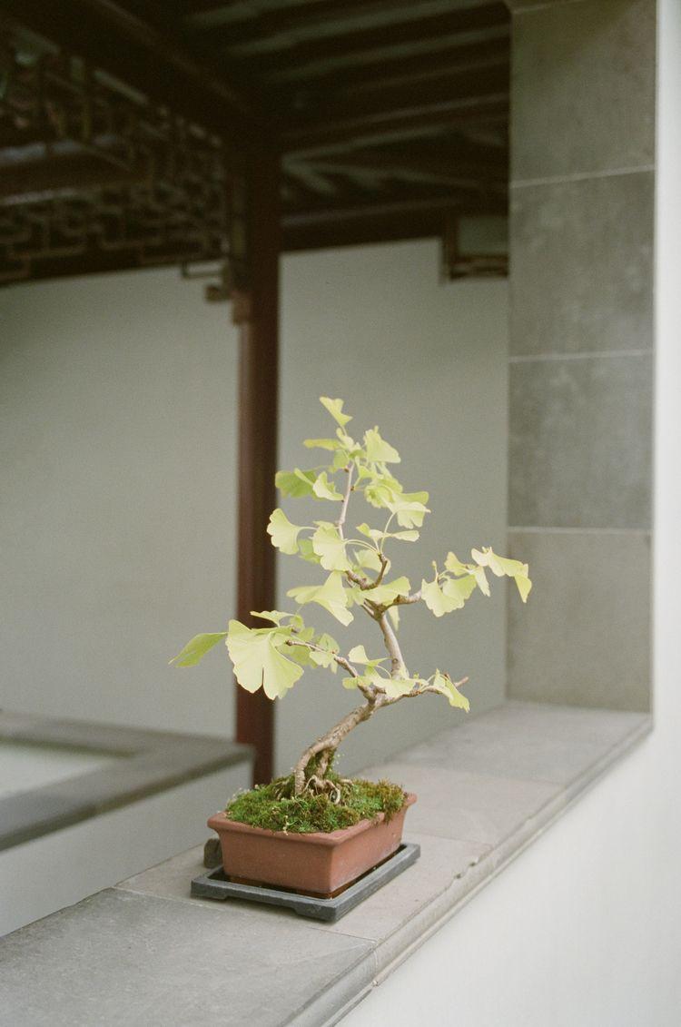 Vancouver Chinese Gardens - leicam6 - eatpomegranate | ello