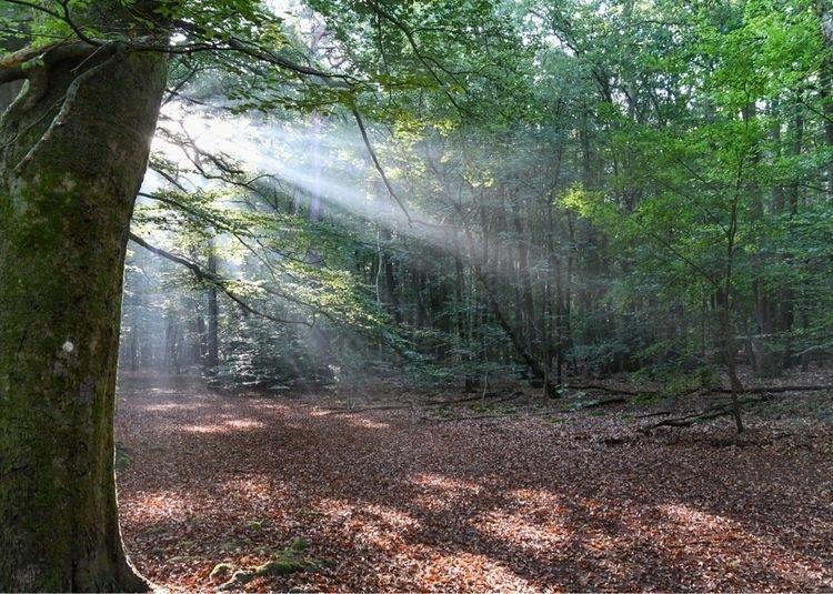 Spanderswoud - Dry Woods 2020 - casperkeller   ello