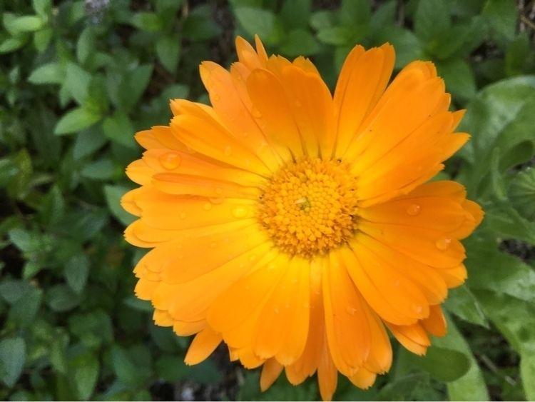 Sending pop colour hugs garden - laurabalducci | ello