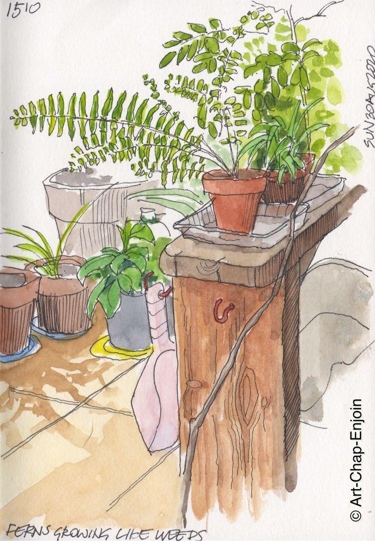 1510 - Ferns growing weeds grow - artchapenjoin | ello