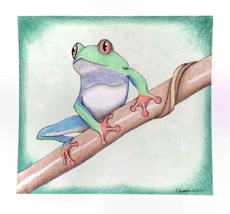 Green Tree Frog. Coloured penci - cadno | ello