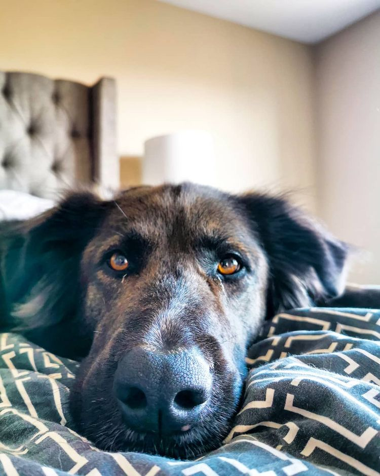 Credit lazy kind Saturday ? day - pupstime | ello