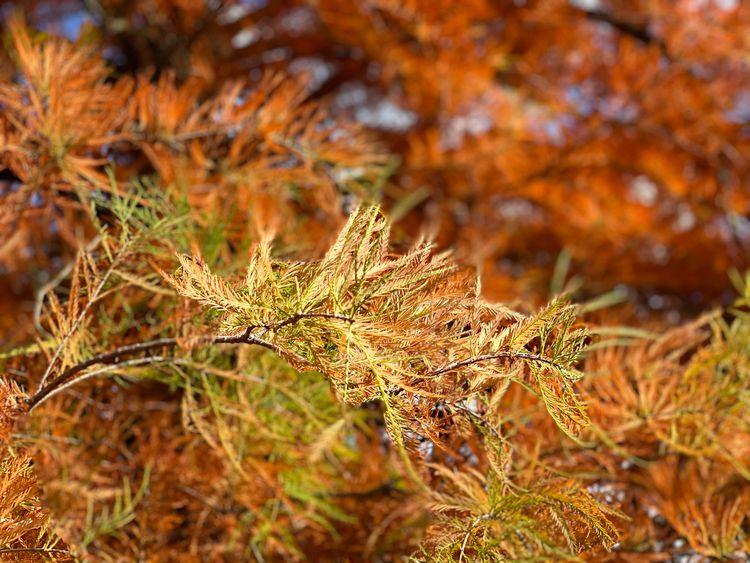 Autumn impression II - eatious   ello