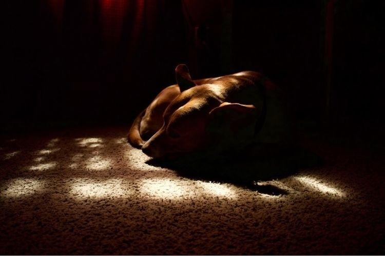 Sleepy dog - charles222a203   ello